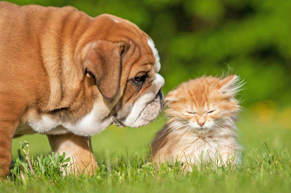 Puppy & Kitten Care  Hendersonville, NC
